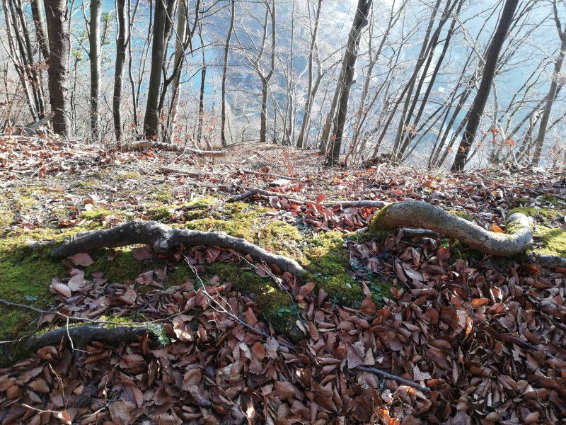 Gozdna art terapija